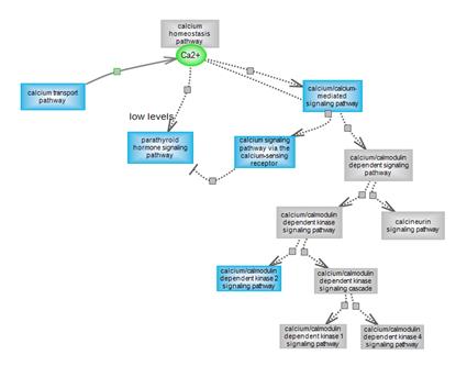 Calcium Homeostasis Pathway Suite