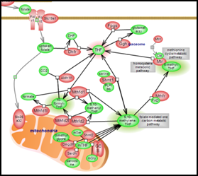 Methionine, Homocysteine, Folate and Related Metabolites Pathway Suite