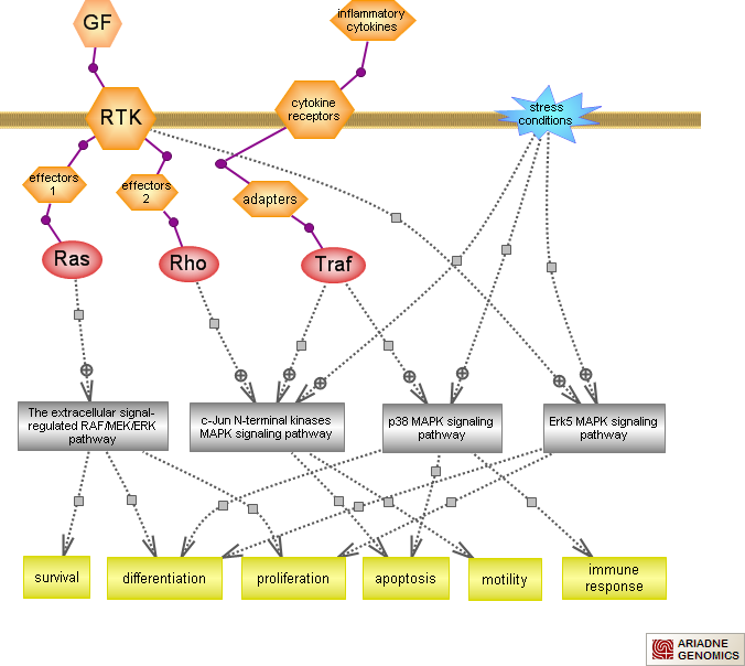 min activated protein kinase signaling pathwayRat Genome ... on insulin pathway, cyclin-dependent kinase, il-6 signaling pathway, thyroid pathway, jak-stat signaling pathway, cell signaling, adenylate cyclase pathway, pi3k/akt/mtor pathway, phosphatidylinositol 3-kinase pathway, receptor tyrosine kinase, wnt signaling pathway, jak 1 2 3 signaling pathway, pi 3-kinase pathway, protein kinase c, mitogen-activated protein kinase, signal transduction, tyrosine kinase, tgf beta signaling pathway,