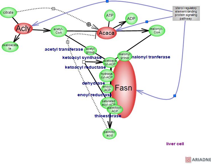 fatty acid biosynthetic pathwayrat genome databasepathway diagram