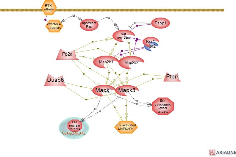 Map2k1 Pathway.The Extracellular Signal Regulated Raf Mek Erk Signaling