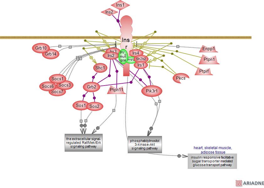 pathway diagram: