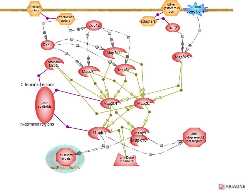 online Praktikum der Molekulargenetik (Springer Lehrbuch) 2004