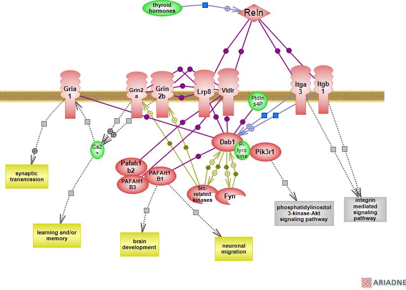 propionate kinase