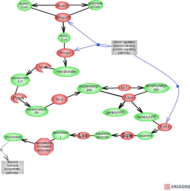 cholesterol    biosynthetic pathwayRat Genome Database