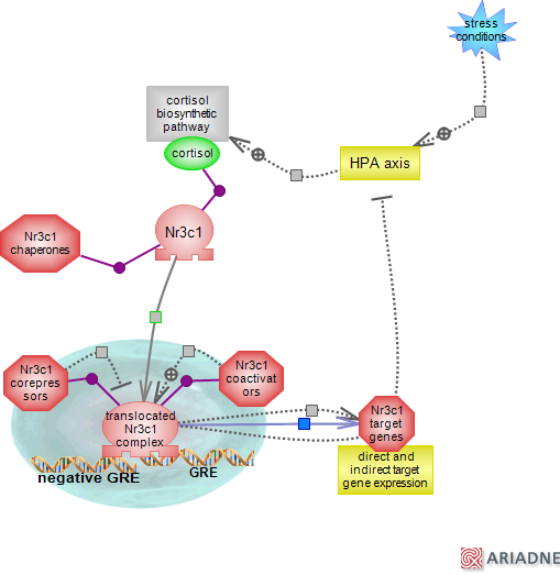 steroid receptor function