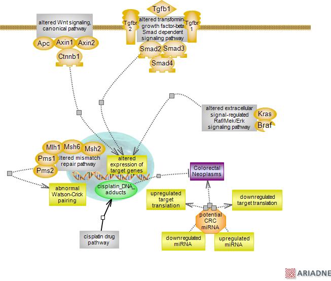 Insulin Goes Viral: Colorectal Cancer PathwayRat Genome Database