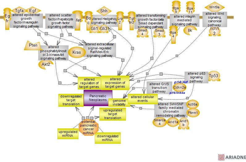 Pancreatic Cancer Pathwayrat Genome Database