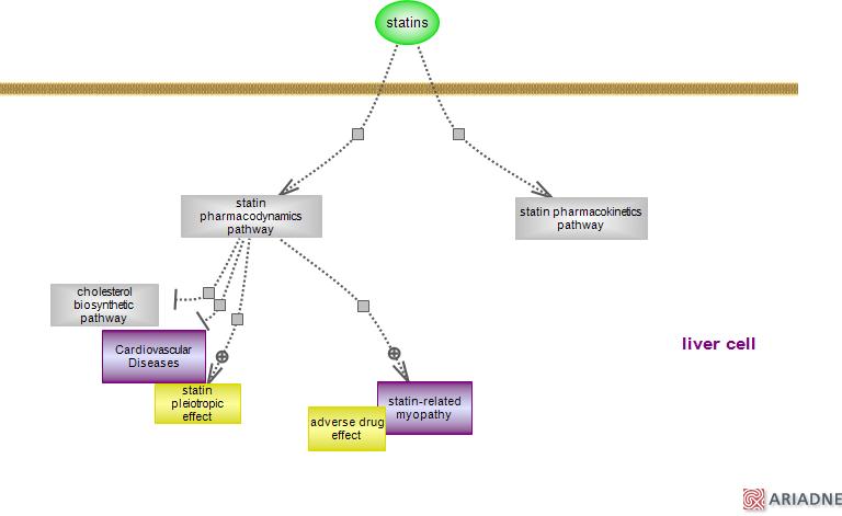 statin drug pathwayRat Genome Database