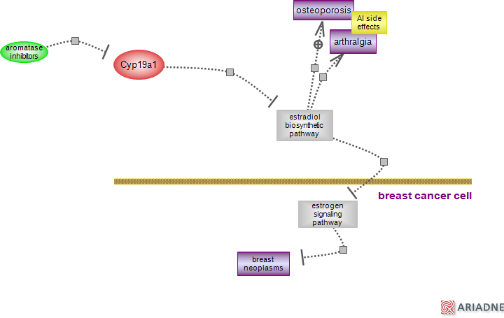 non-steroidal aromatase inhibitor