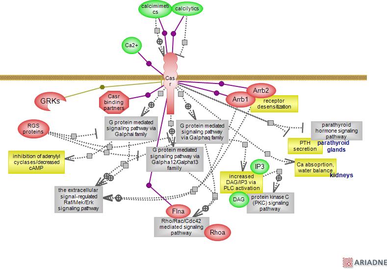Calcium Signaling Pathway Via The Calcium Sensing Receptorrat Genome