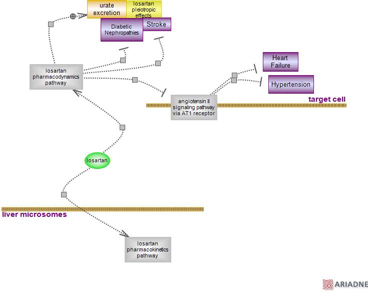 Losartan Drug Pathwayrat Genome Database
